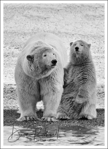 Alaska & the Arctic