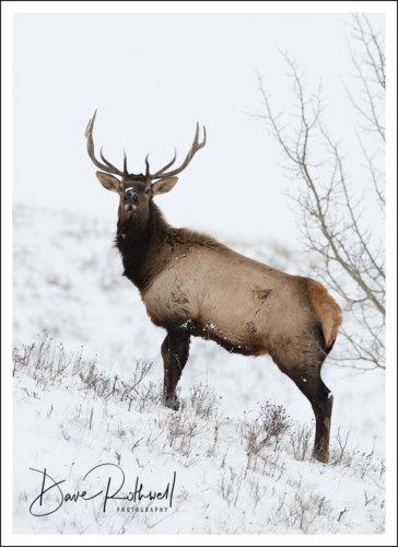 Hooves & Horns